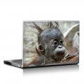 Скин за лаптоп - Маймуни - 009