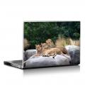 Скин за лаптоп - Диви котки - 005