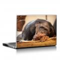 Скин за лаптоп - Маймуни - 020