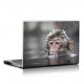 Скин за лаптоп - Маймуни - 002