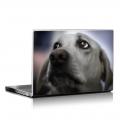 Скин за лаптоп - Кучета - 071