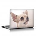 Скин за лаптоп - Кучета - 008