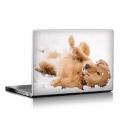 Скин за лаптоп - Кучета - 056
