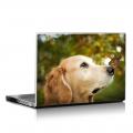 Скин за лаптоп - Кучета - 001