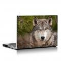 Скин за лаптоп - Кучета - 078