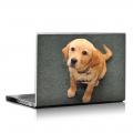 Скин за лаптоп - Кучета - 016