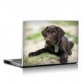 Скин за лаптоп - Кучета - 024