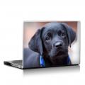 Скин за лаптоп - Кучета - 014