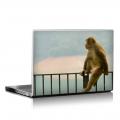 Скин за лаптоп - Маймуни - 005